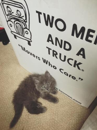 tmt cat